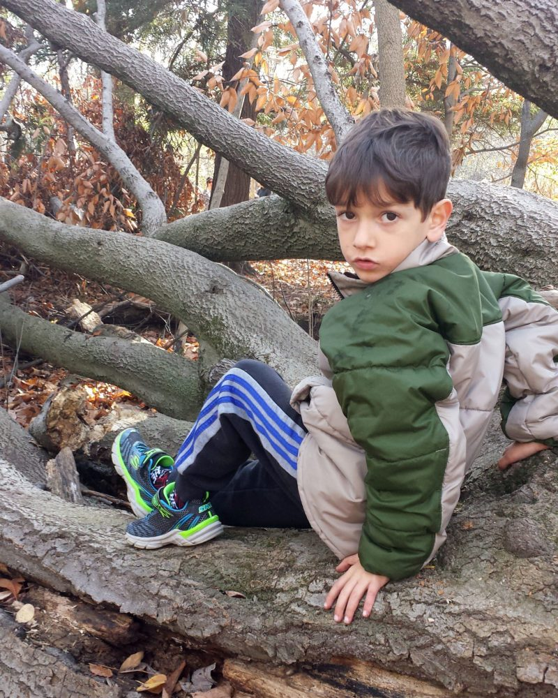 Spiro sitting on fallen tree